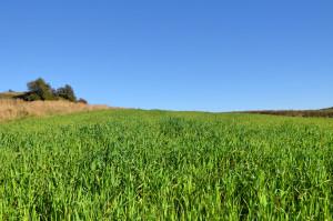 Żary - zielone pole