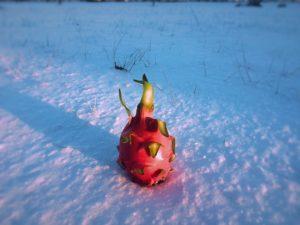 dragons fruit
