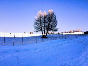 drzewo dolomity