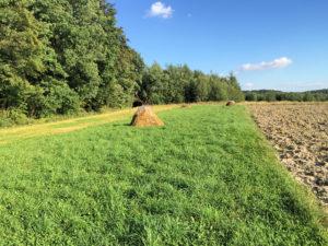 Łazy łąka