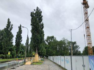 zgoda na wycinkę drzew